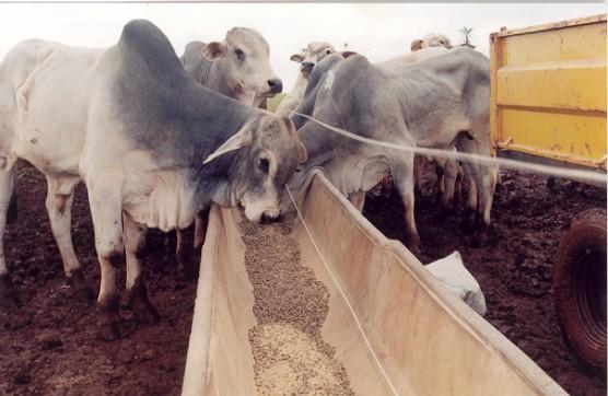 Reposicionamento no mercado global da carne: uma oportunidade