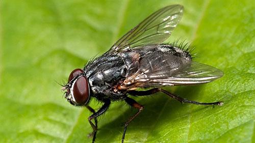 Escola Agrotécnica desenvolve projeto de controle da mosca-dos-estábulos