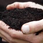 Como transformar adubo orgânico em ração para o rebanho?