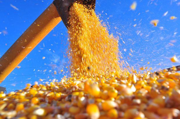 Preços do milho devem favorecer confinamento em 2017