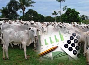 Cepea: o que é, qual a sua história e como atua no mercado do agro brasileiro?