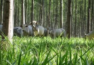 Dia do Meio Ambiente: por que o agro brasileiro é o mais sustentável do planeta?