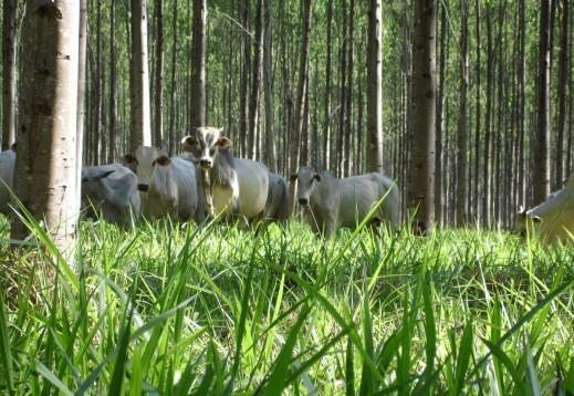 Brasil alcança projeção mundial com pecuária sustentável