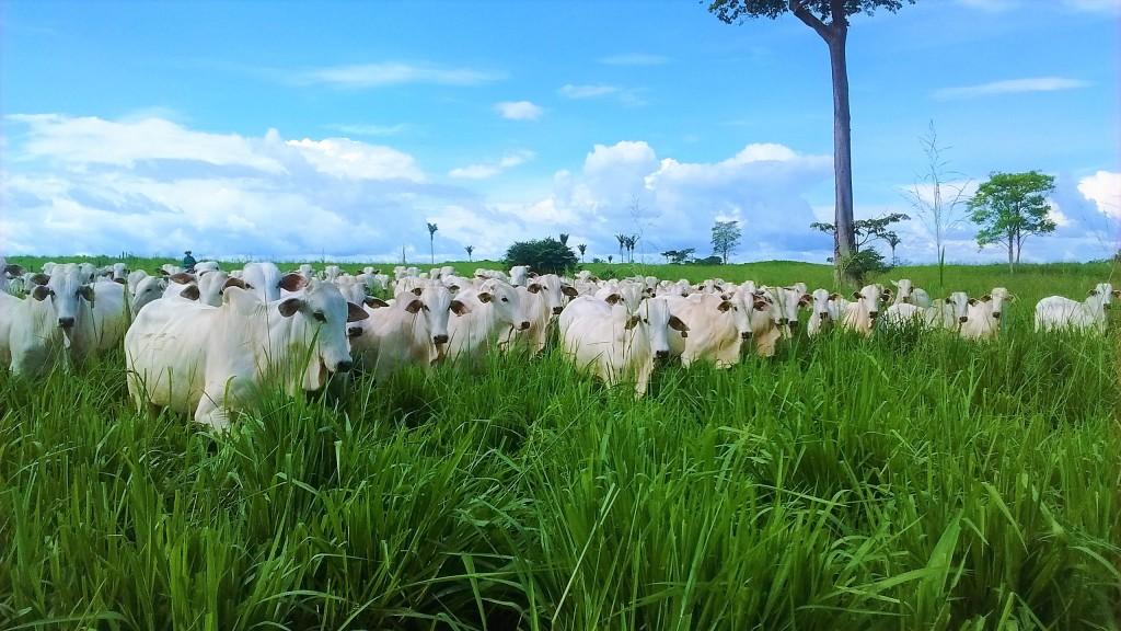 Conheça e acesse três ferramentas para melhorar a sustentabilidade de sua fazenda