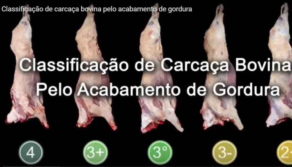 video-abiec-classificacao-carcaca-bovina-pelo-acabamento-de-gordura