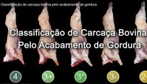 Classificação de Carcaça Bovina: vídeo da Abiec apresenta padrões estabelecidos