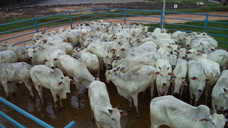 Fazenda Bom Jesus, Aristeu Alceu Carbonaro, Bela Vista – MS