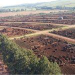 Dia de campo em Guaiçara-SP vai abordar premiação por carne de qualidade