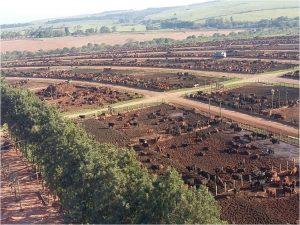 Rastreabilidade ajuda na gestão da fazenda e pode agregar valor à carne bovina