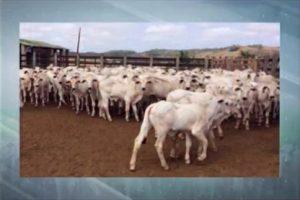 Fazendas do NE superam clima adverso e elevam produtividade de carne e leite