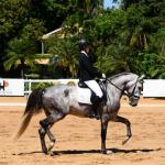 Exposição de cavalo Puro Sangue Lusitano é destaque no Giro do Boi