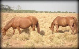 Confira dicas de nutrição para cavalos neste inverno
