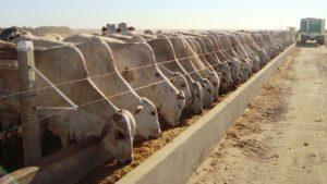 Vendas de suplementos para bovinos em confinamento crescem 40% no Brasil