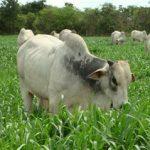 Quem deve ser o responsável pelos resultados da sua fazenda?