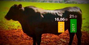 Conheça a fazenda que em menos de quatro anos incrementou 4 arrobas no peso da boiada