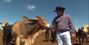 Bem estar animal ajuda fazenda de GO a atingir 35 arrobas por hectare ao ano