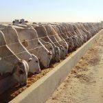 Segurança alimentar pode ser fator de agregação de valor à carne brasileira