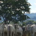Programa nutricional dobra desfrute e triplica produção de arrobas em fazenda de Goiás