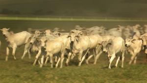 Fazenda de pecuária no Cerrado desfruta de renda semelhante à agricultura