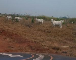 Caravana da Produtividade está em Mato Grosso