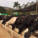 Mais leite por hectare ao ano: confira as ações da Caravana da Produtividade