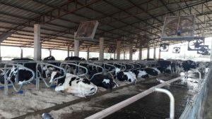 Caravana da Produtividade: equipe do leite segue para SC na próxima semana