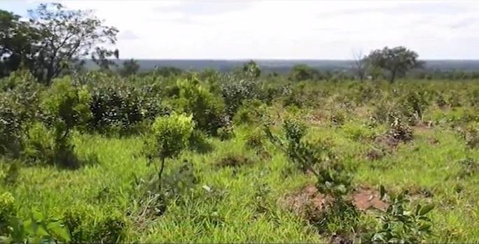60% das áreas de pastagem no Brasil estão em algum estágio de degradação
