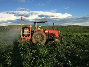 Aplicação foliar de herbicidas: confira cuidados para não pulverizar seu dinheiro