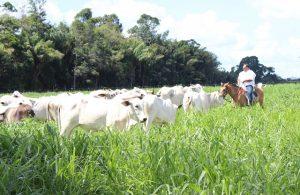 Sucessão rural: como uma boa história garante o futuro de sua fazenda?