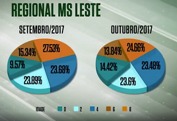 Pecuarista supera estiagem e abate de animais precoces no leste do MS sobe 4,3%
