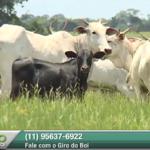 Como as fazendas de sucesso conseguem índices reprodutivos acima da média?