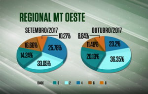 Abate de animais precoces cresce 6,6% no oeste do MT em outubro