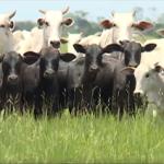 Cinco passos para impedir que você tenha um problema em sua fazenda