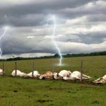 Raios estão matando gado no Brasil; saiba como evitar
