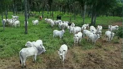 semi-confinamento-catalao-goias-fazenda-buriti-paraiso