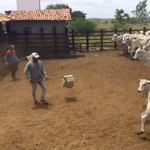 Sanidade faz a diferença para aumento da produção pecuária no Sergipe