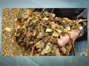 Cria intensiva e confinamento contribuem para engorda de bois superprecoces com 600 kg