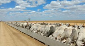 Confinamento e semi-confinamento; confira dicas para iniciar o sistema de produção no Nordeste
