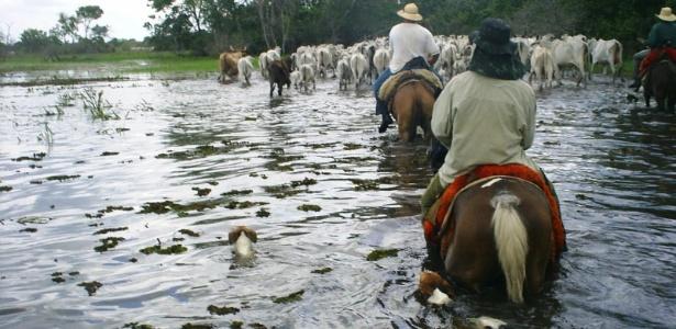 peoes-conduzem-o-gado-em-pasto-alagado-no-pantanal-do-paiaguas-ms-