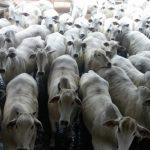 Melhor lote de março: Fazenda Cristo Redentor, de Miranda-MS, vence eleição