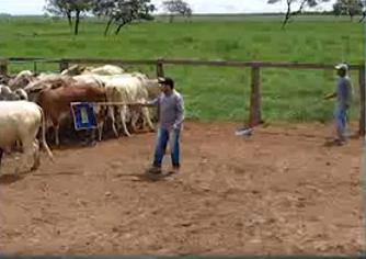 bem-estar-animal-e-sanidade-treinamento-agropecuaria-ceolin-correntina-bahia