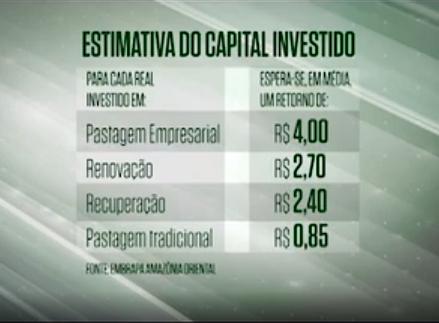 Pecuarista tem retorno de até R$ 4 para cada real investido em pastagem profissional