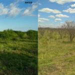 Pecuaristas do Tocantins aprovam novo defensivo que controla plantas daninhas lenhosas e semilenhosas