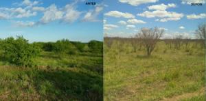 Novo herbicida permite controle foliar de até 80% das plantas lenhosas e semilenhosas