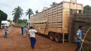 Cuidados no pré-embarque reduzem estresse no transporte de gado magro