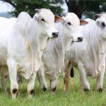 Fazenda Jaó, em Três Lagoas-MS, recebe 4º Dia de Campo CS neste sábado, 26