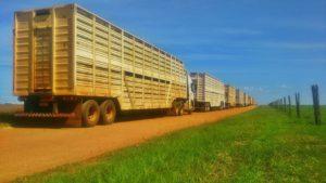 Conheça os números e curiosidades da logística da indústria da carne bovina no Brasil