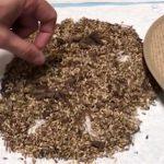 Veja as dicas deste especialista antes de comprar sua semente de pastagem