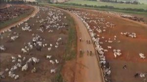 Terminação de gado em boitel de SP rende lucro médio de 15% ao pecuarista