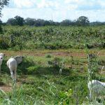 Três passos para melhorar a produtividade da pecuária a pasto na seca